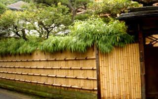 Забор из бамбука и тростника: где купить и особенности возведения