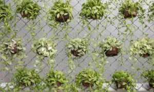 Как украсить забор из сетки рабицы? Варианты и фото декора