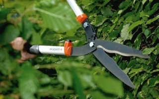 Садовые ножницы для живой изгороди Fiskars, Gardena: что выбрать для стрижки кустов
