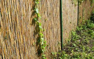 Как сделать забор и изгородь из камыша своими руками