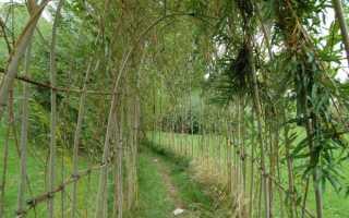 Живая изгородь из ивы: как сделать своими руками