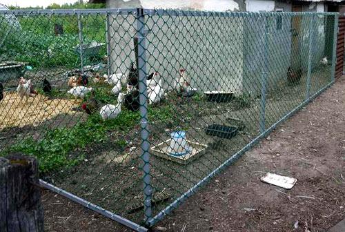 ограда для птичника