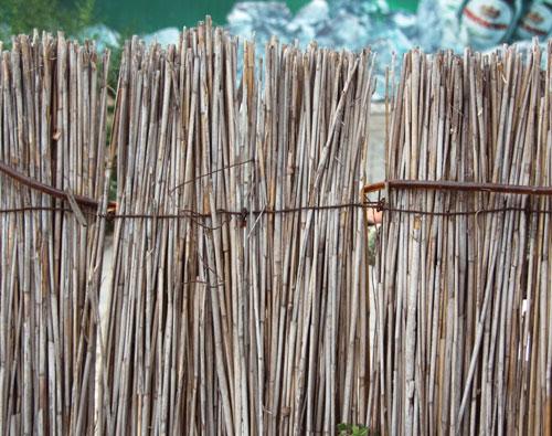 тростниковая ограда