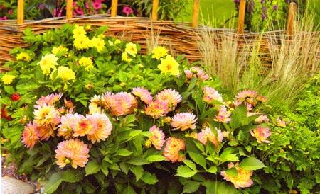 цветы плетень