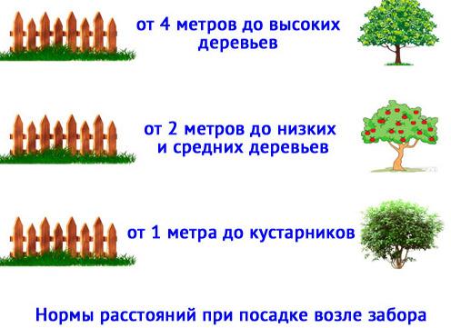 нормы посадки кустарников