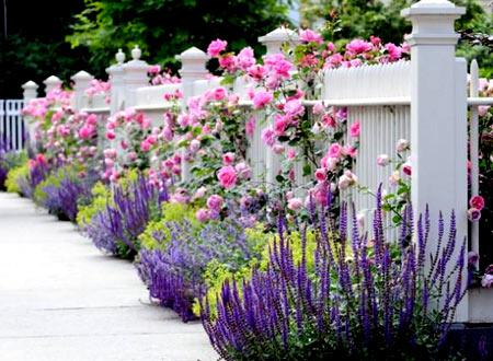 растения на заборе