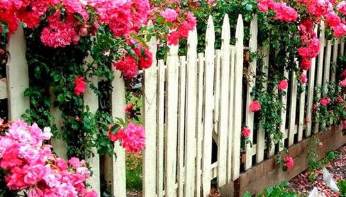 растения забор